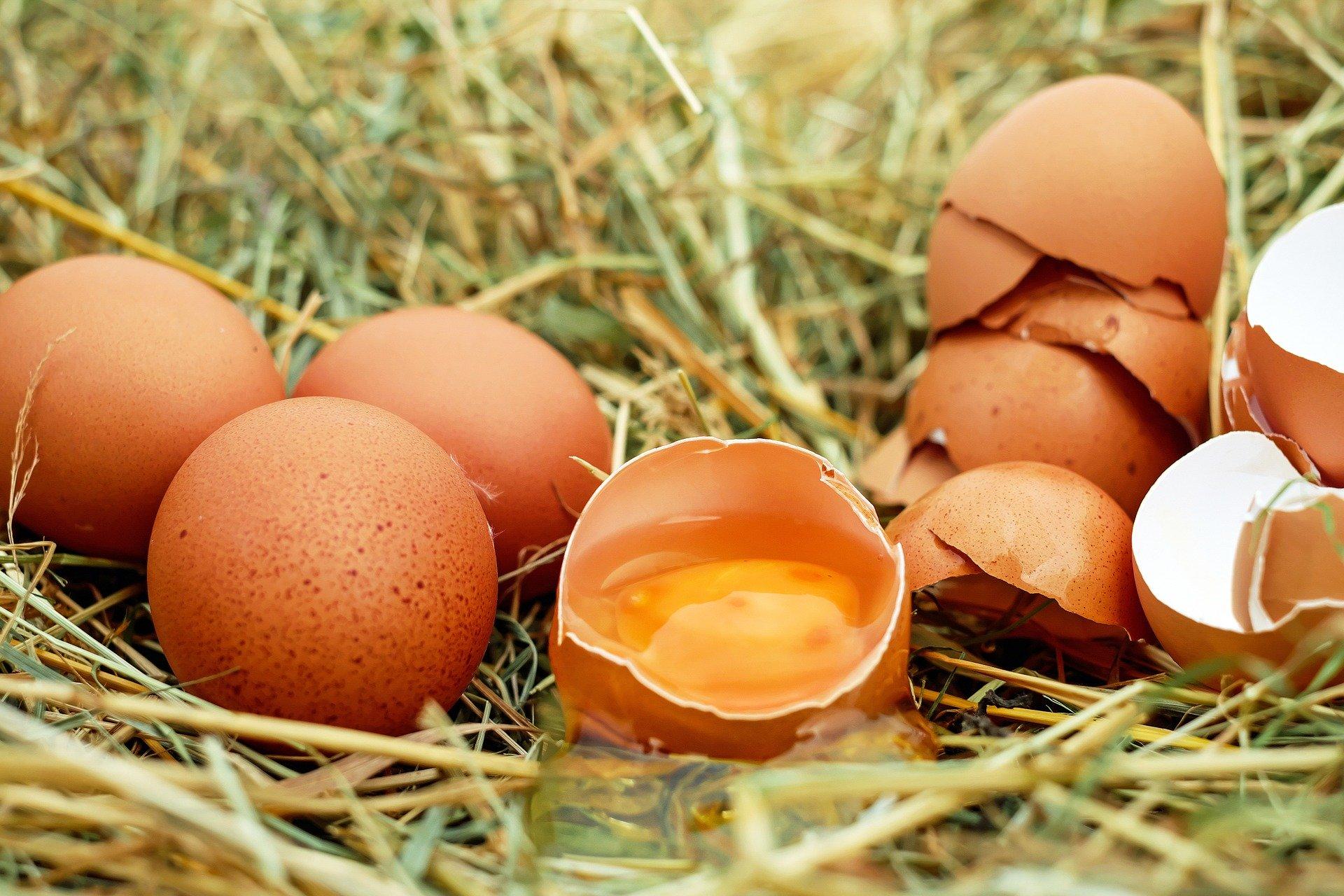 comida ecológica huevos