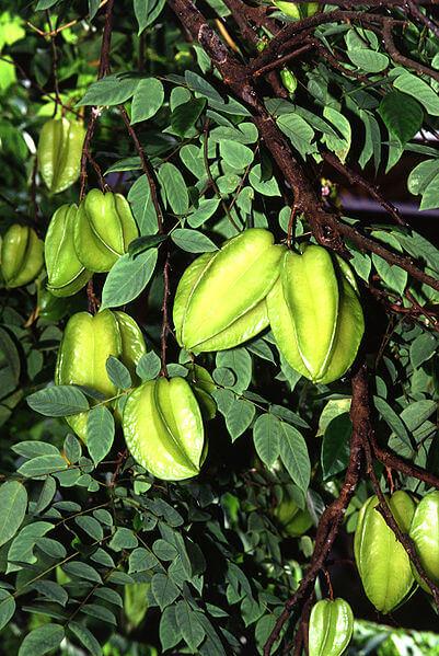 las mejores frutas para mejorar tu salud